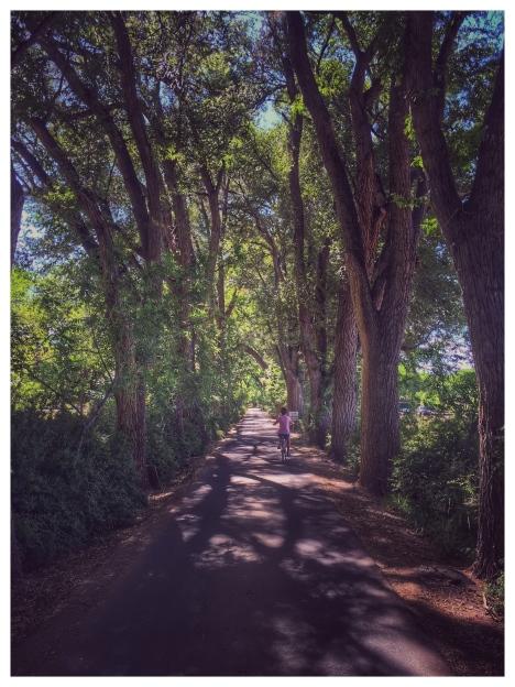 Driveway Los Pablanos