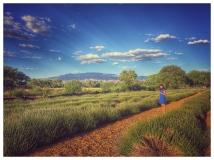 Lav Field Pablanos